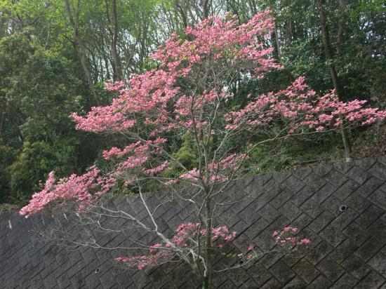2014.4.18岐阜