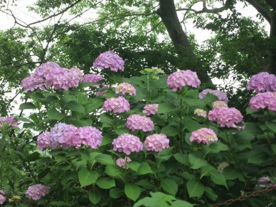 2014.6.17神奈川・東京2