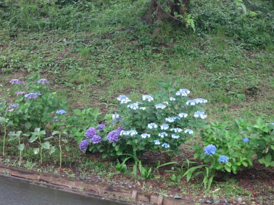 2014.6.24静岡・神奈川1