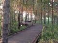 夕陽を浴びる木立