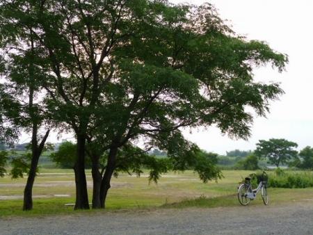 川岸の公園2