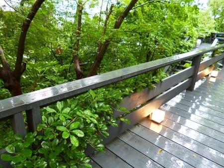 秋篠の森9