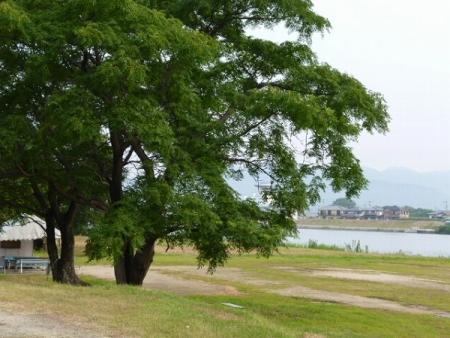 川岸の公園1