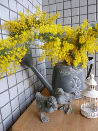 s-mimoza3.jpg