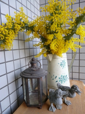 s-mimoza4.jpg