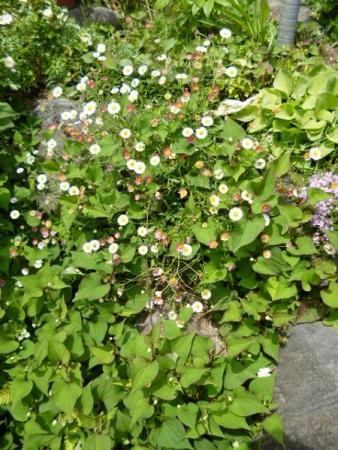 バラの庭31