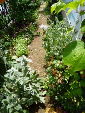 バラの庭10