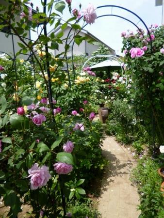 バラの庭11