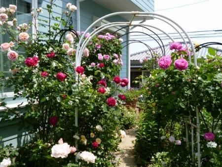 バラの庭13