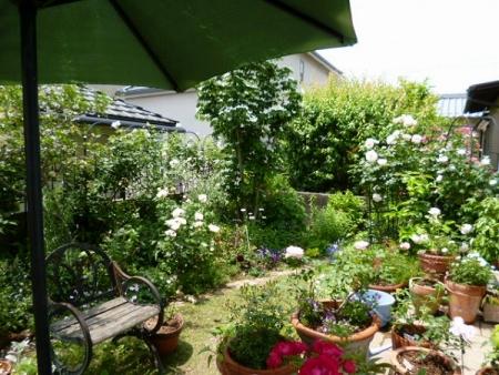 バラの庭14