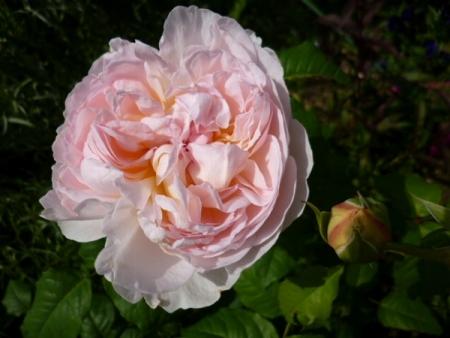 バラの庭19