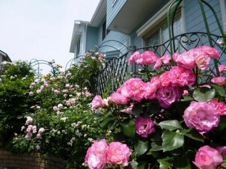 バラの庭1