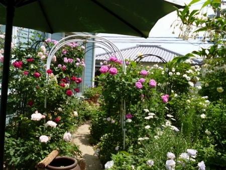 バラの庭22