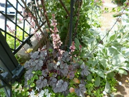 バラの庭23