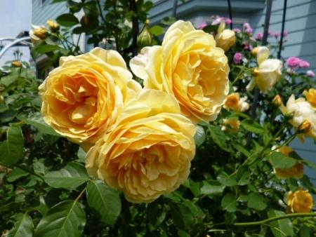 バラの庭25
