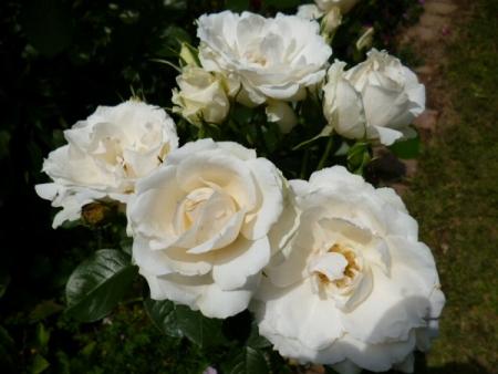 バラの庭27