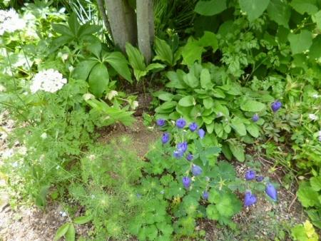 バラの庭28