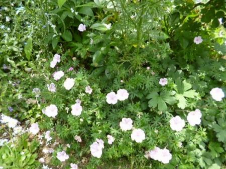 バラの庭29