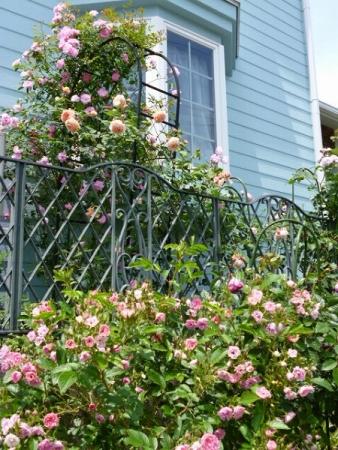 バラの庭5