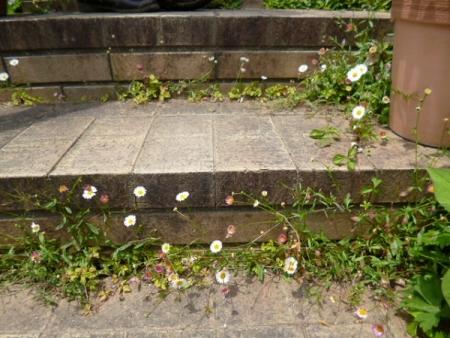 バラの庭6