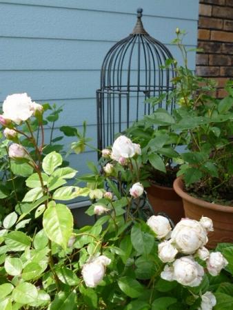バラの庭9