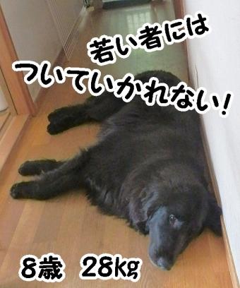 P5020013_01-002.jpg