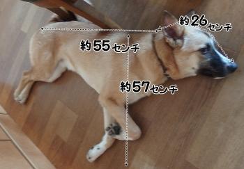 P7260007_03.jpg