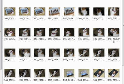 140511_cat01.jpg