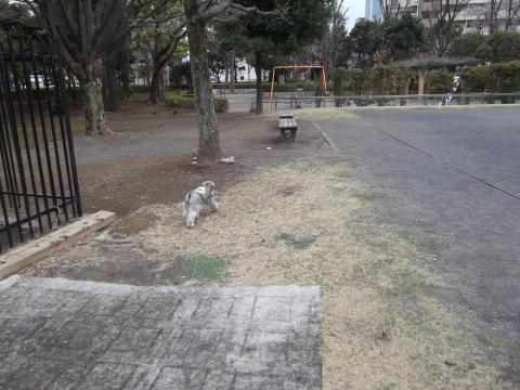 昭島朝んぽウィル