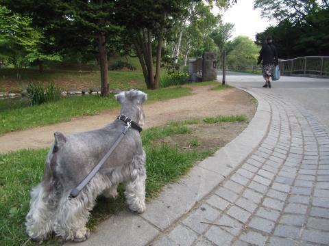 中島公園 夕んぽ