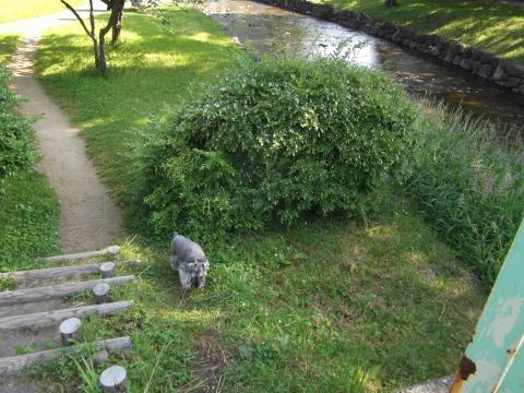 中島公園 朝んぽ