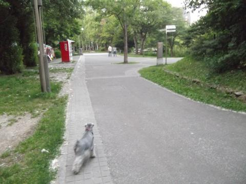 中島公園夕んぽ
