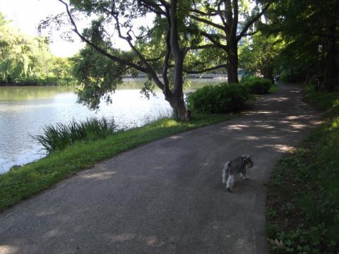 中島公園にてウィル