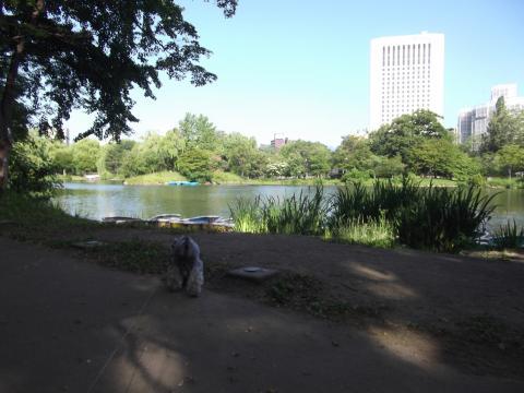 中島公園ポメ