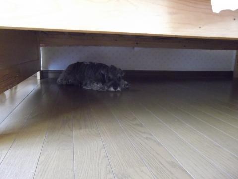 カントリーボーンのベッド下