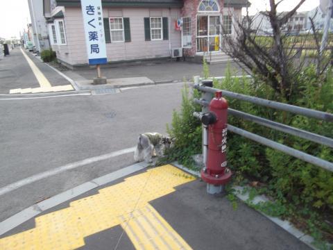 能代朝んぽ・国道101号線