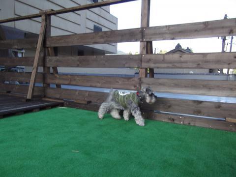 望川閣のドッグバルコニーにてウィル