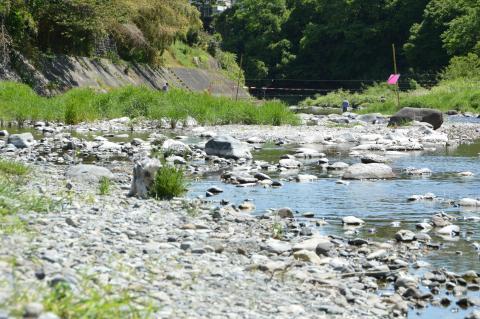 秋川渓谷にてウィル