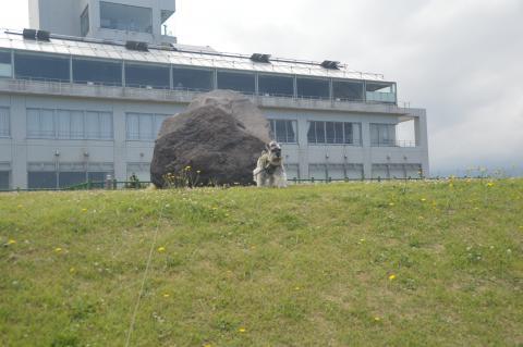 道の駅象潟 ねむの丘