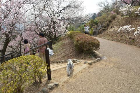 青梅市梅の公園