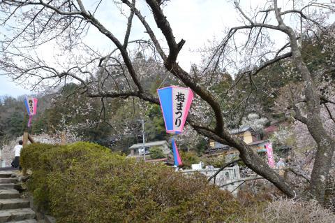 青梅市梅の公園 梅まつり