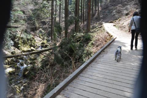 払沢の滝へウィル