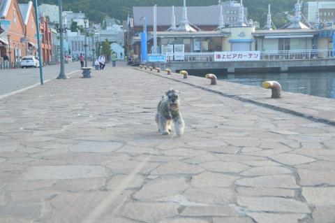 函館西波止場