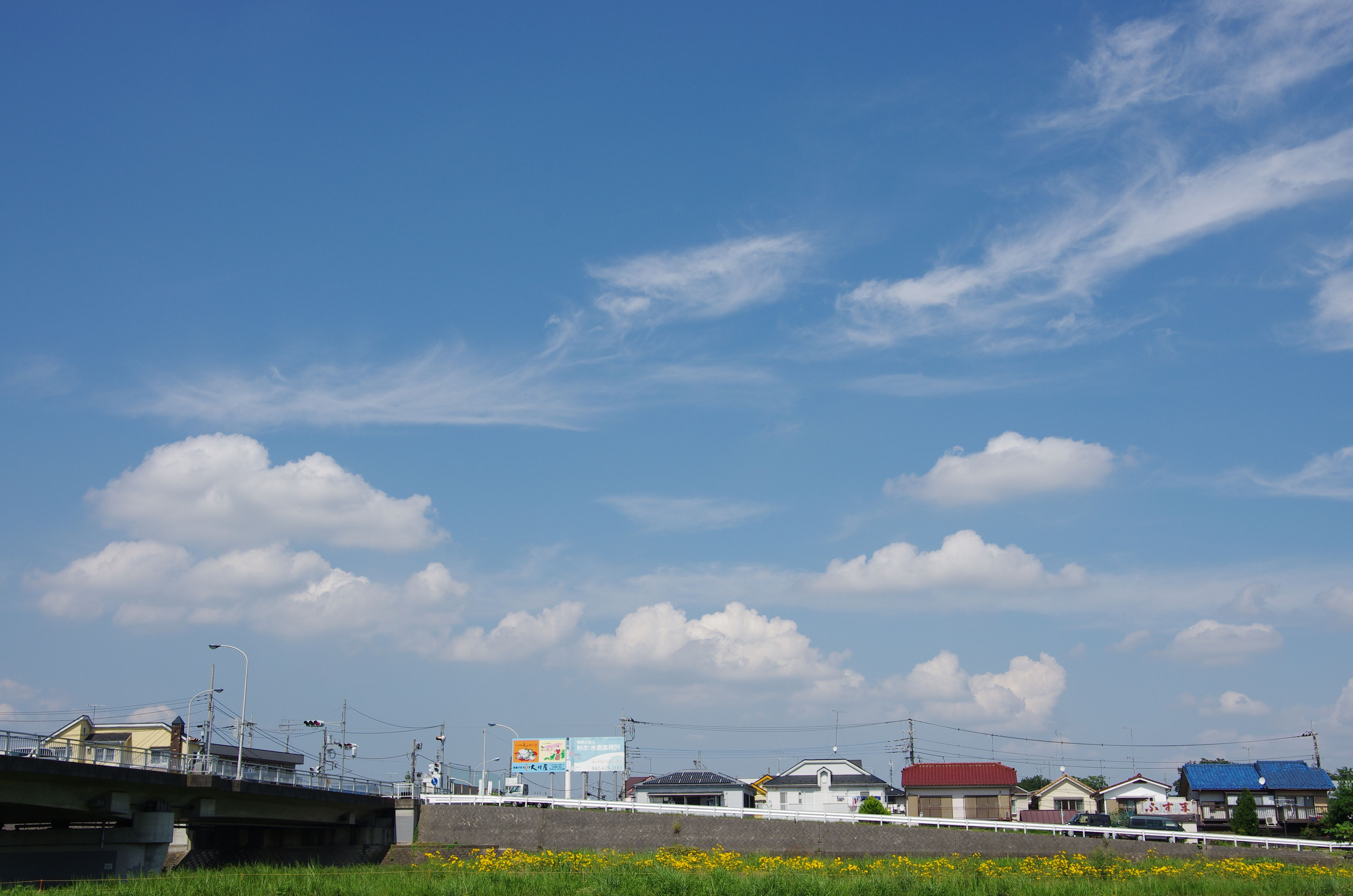 雲を仰ぐ花々
