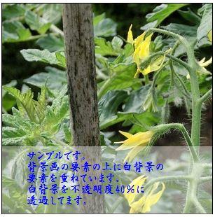 001c.jpg