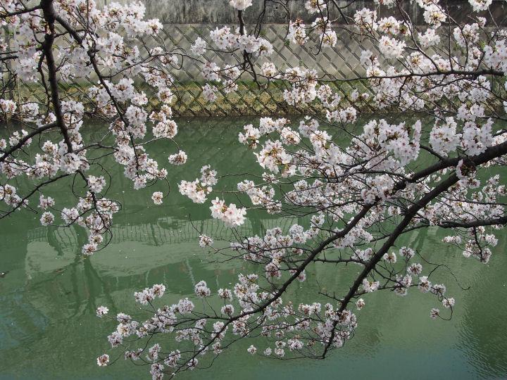 大岡川プロムナード-OMD50759
