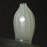 ツマベニチョウ卵