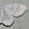 96-フタテンシロカギバ-OMD04753