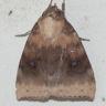 96-クロオビリンガ-OMD06352