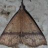 96-ナミテンアツバ-OMD01061